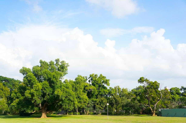 路思义教堂旁的草地