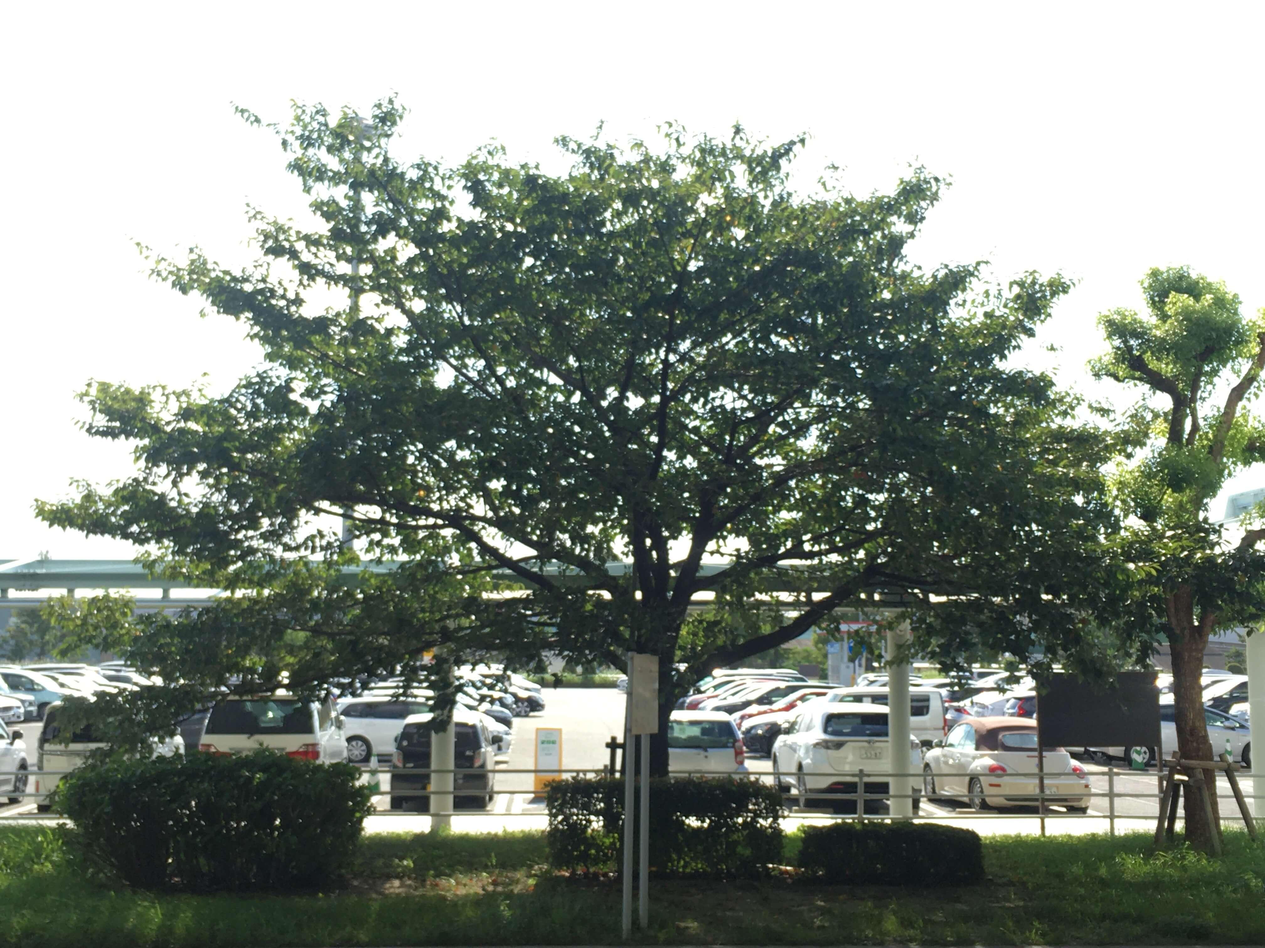 等公车的时候无聊拍了张对面的树